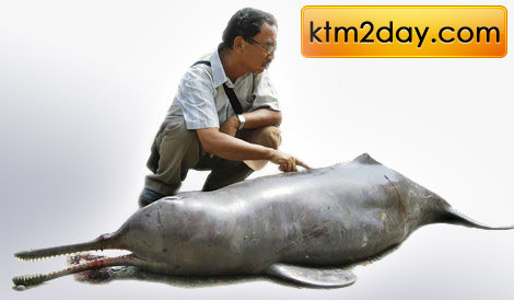 dolphin-in-nepal
