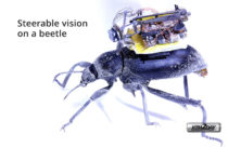 Researcher Create a Tiny Camera Backpack for Beetles